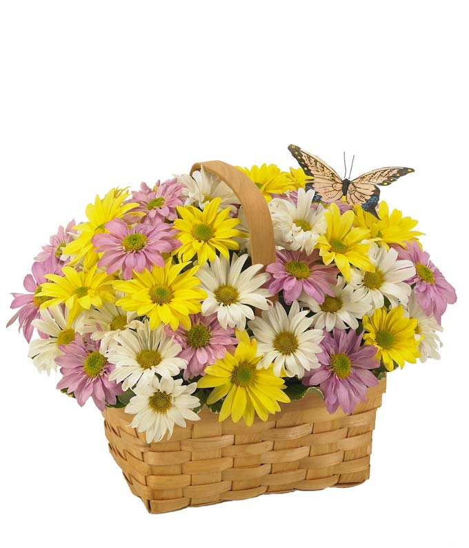 White, yellow and purple daisies in a woven basket