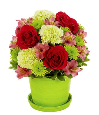 Flowers - Sorbet Blooms - Regular