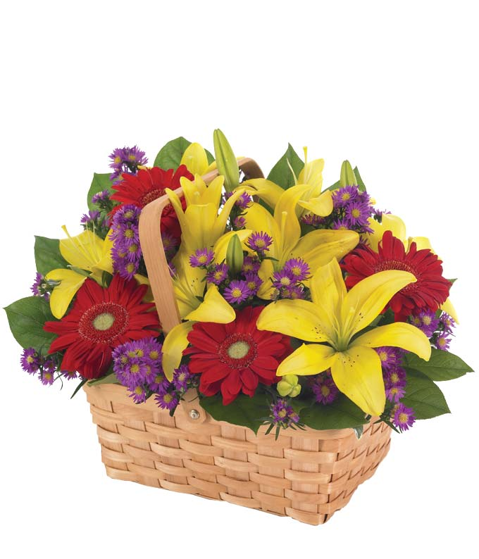Gerbera Daisy Garden - Regular Say thanks for all you've done with this fresh, hand-designed arrangement of lilies, gerberas and monte casinos in a reusable splitwood handled basket. Measures 15 H by 12 L. Includes:  Yellow Lilies  Red Gerbera Daisies Purple Monte Casino  Keepsake Basket  Flower Delivery Today Available
