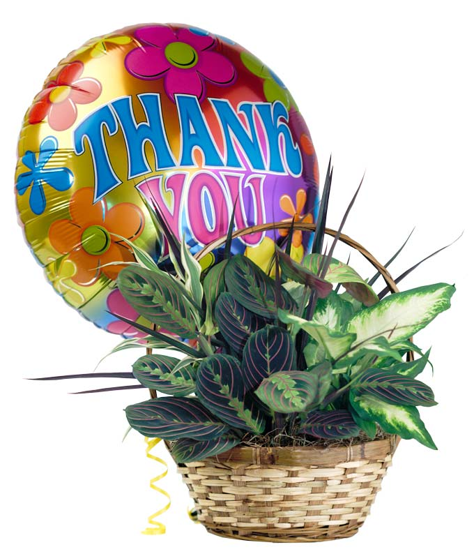 Gift Baskets - Thank You Garden - Regular Send your gratitude with the Thank You Garden! This beautiful green house plant is arranged in a woven planter and paired with a thank you balloon to complete the arrangement. Created by a florist and available for delivery today, it is the perfect thank you gift. Measures approximately 12 H x 8 D. Includes:  Fresh Dish Garden  Decorative Planter  Thank You Mylar Balloon  Florist Delivered  FREE Card Message