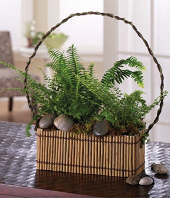 Fern garden in willow designer tray