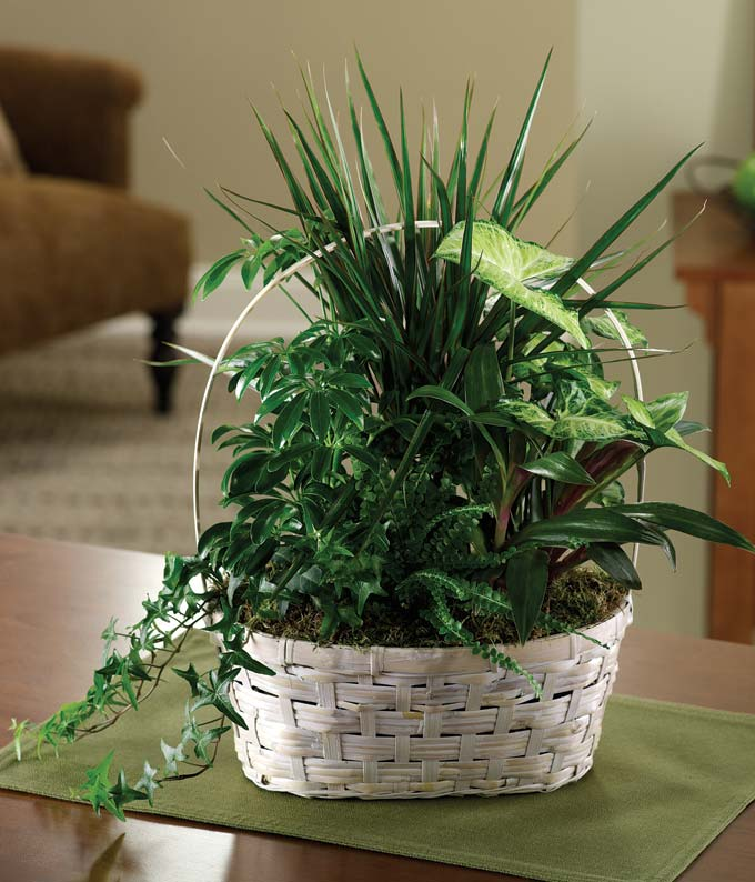 Luscious Green Garden Basket