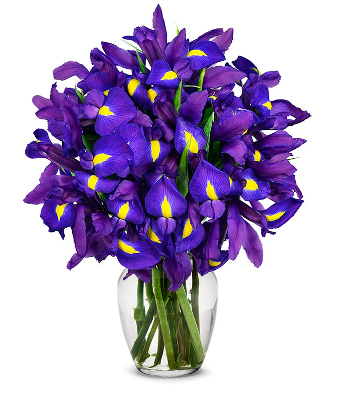 stunning blue iris   stems at from you flowers, Natural flower
