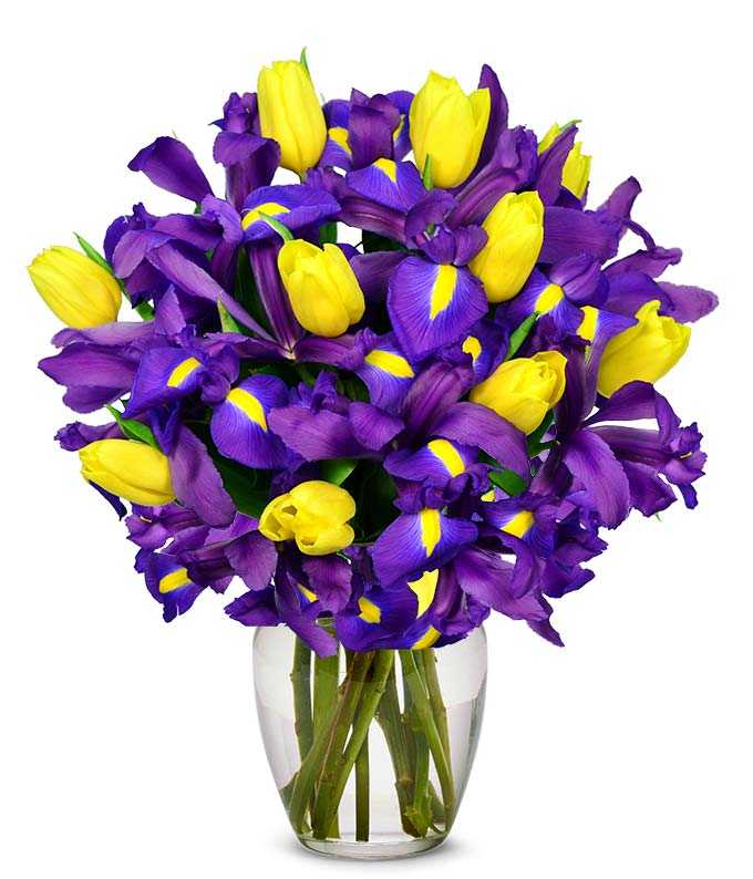 Blue iris flowers arranged with yellow tulips for gift delivery