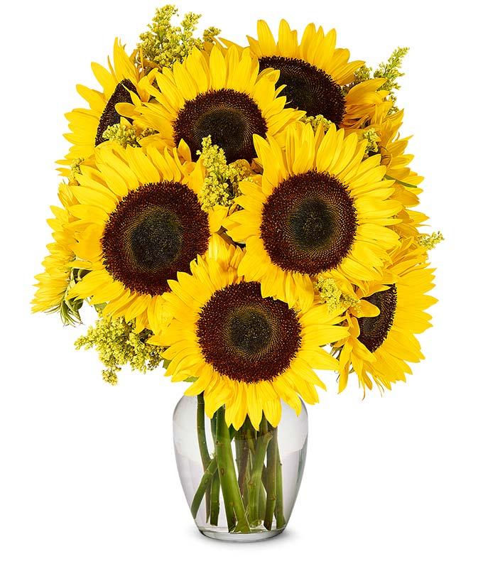 Fall Sunflowers - Premium