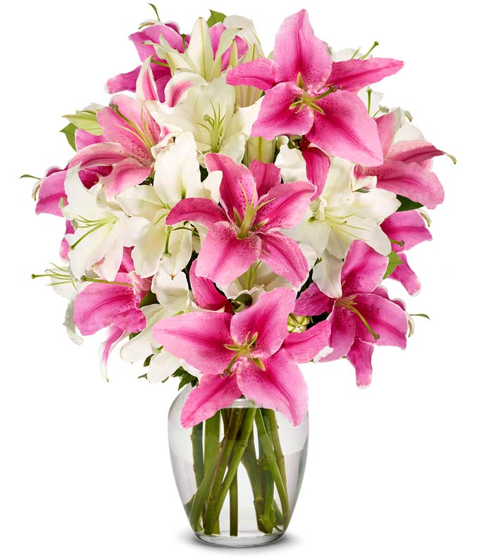 Stunning Pink and White Lilies - Premium