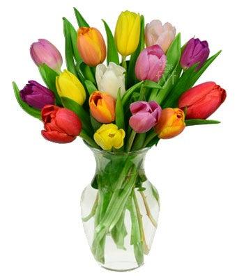 15 Rainbow Tulips