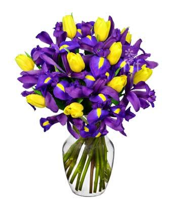 Blue Iris and Yellow Tulips