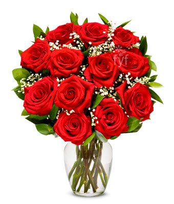 One Dozen Premium Long Stemmed Red Roses