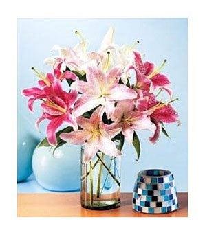 Summerburst Lilies