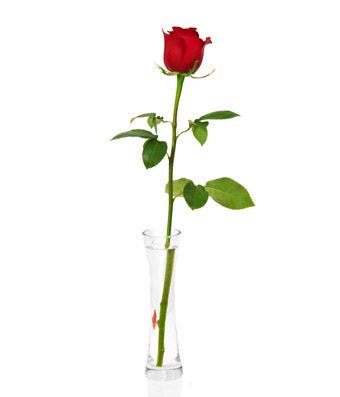 Single Red Rose at From You Flowers  Single Red Rose...