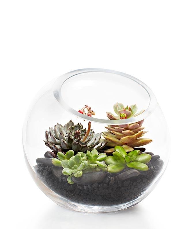 Luxury Succulent Terrarium
