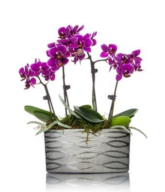 Modern Magenta Mini Orchid Planter