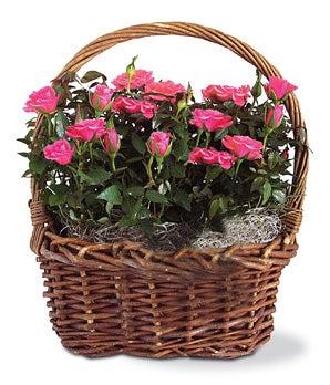 Pink Rose Woven Basket