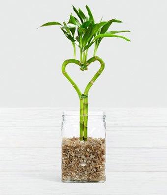Be Still My Heart Bamboo - 1 Heart