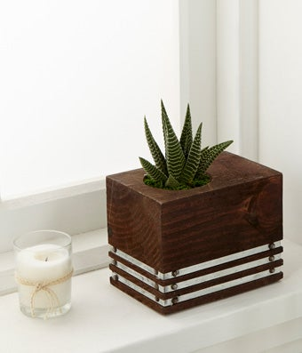 Succulent Plant by Better Homes and Gardens