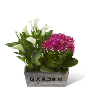 Dish garden delivered with calla lily & kalanchoe plant