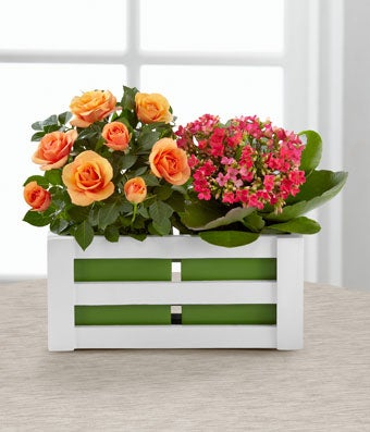 Mini orange rose plant arranged with a pink kalanchoe plant