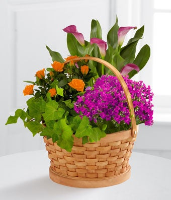 The FTD� Harvest Wishes Blooming Basket by Better Homes and Gardens� - BETTER