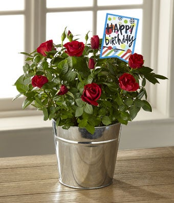The Bright & Happy Birthday Mini Rose by Hallmark