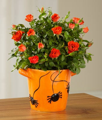 Spider Surprise Halloween Mini Rose