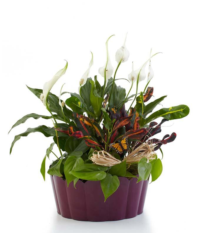 Plants-A-Plenty - Deluxe