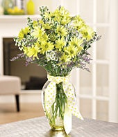 Yellow daisies, white monte casino in a glass vase with ribbon