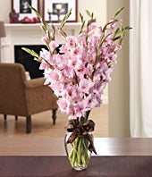 Pink gladiolus in a traditional glass vase