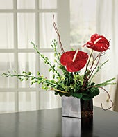 Contemporary Anthurium Arrangement