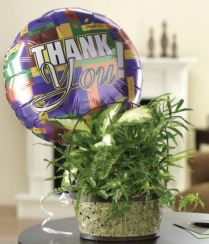 Green plant delivered with thank you balloon