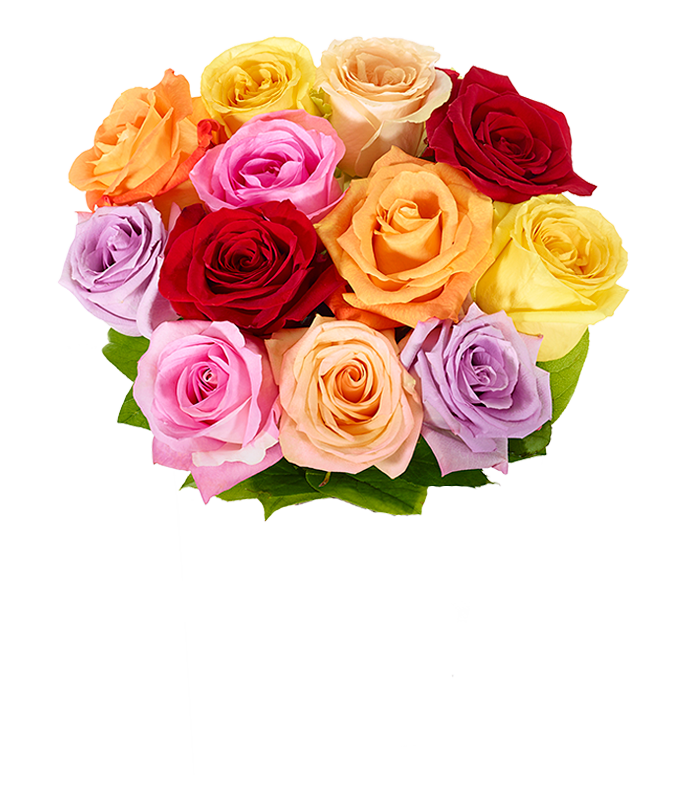 One dozen mixed cheap roses for delivery