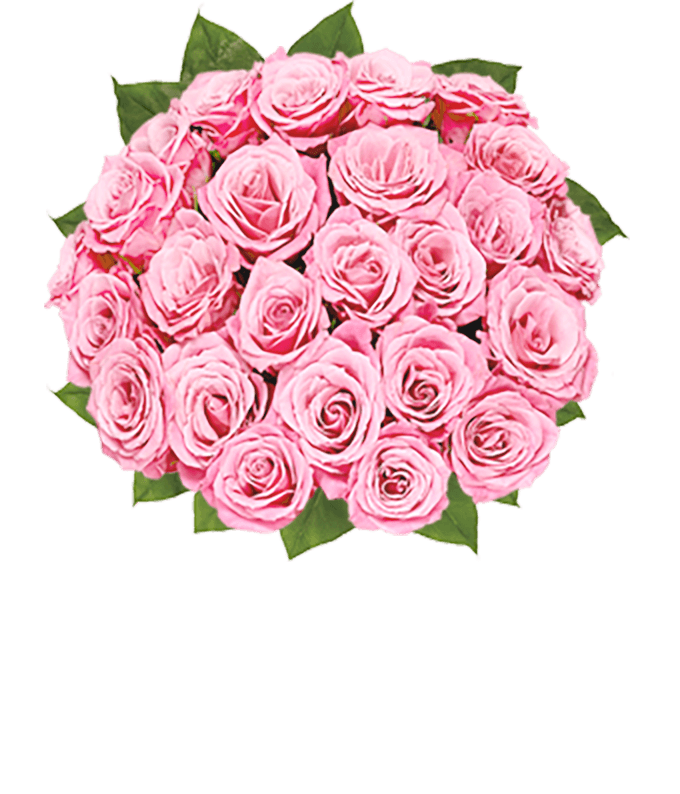 Two dozen long stem pink roses