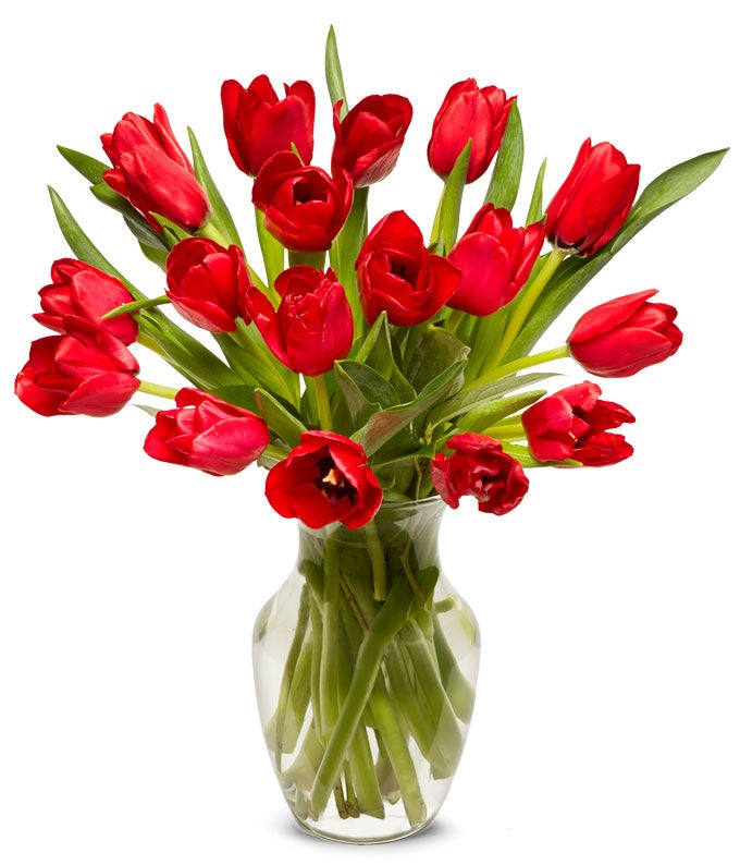 Valentine tulips in red for delivery