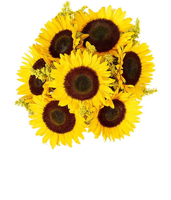 Fall Sunflowers