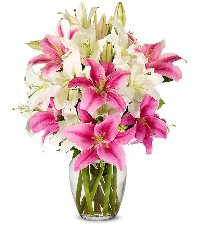 Stunning Pink and White Mother's Day Lilies