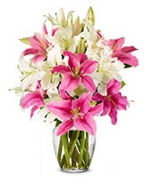 White & Pink Lilies