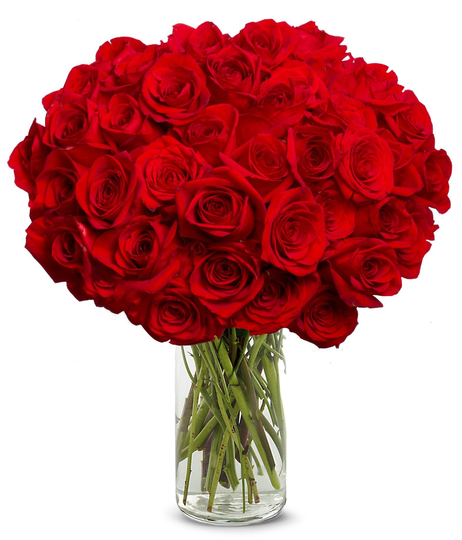 50 Stunning Long Stemmed Red Roses