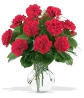 One Dozen Red Carnations: From You Flowers