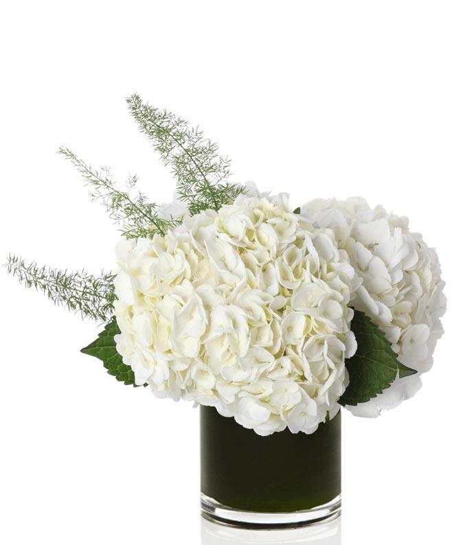 White hydrangea in a cube vase