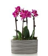 Modern Magenta Orchid Planter