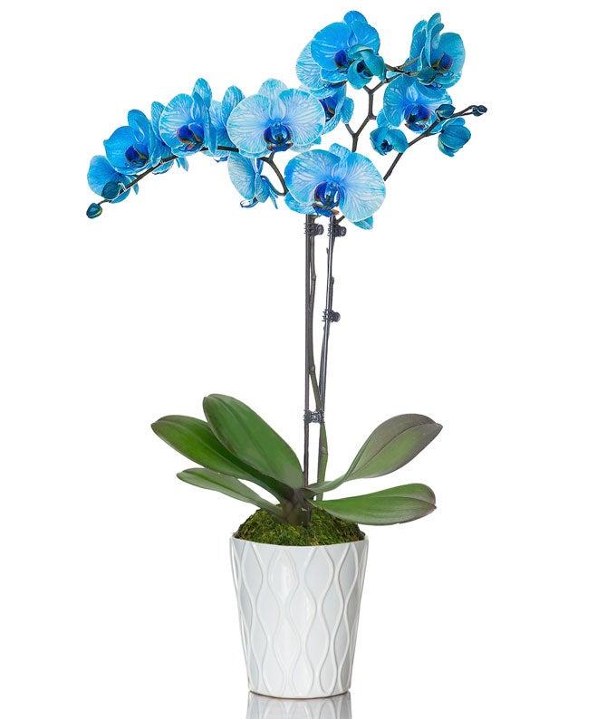 Blue Watercolor Orchids