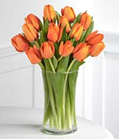Orange Tulips with FREE Glass Vase