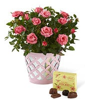 Just for Mom Mothers Day Mini Rose with Chocolate
