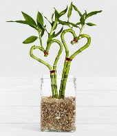 Be Still My Heart Valentine Bamboo - Better