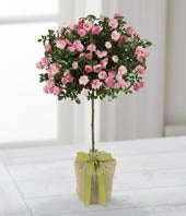 The FTD� Gratitude & Grace for Mom Rose Topiary by Better Homes and Gardens�