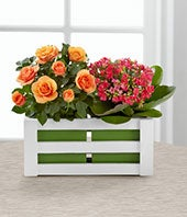Mini orange rose plant arranged with a pink kalanchoe plant