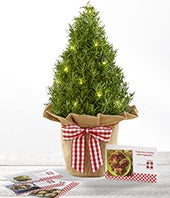 The FTD Let in the Light Holiday Rosemary Tree & Recipe Cards by Better Homes and Gardens