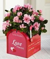 Love Notes Valentine's Day Azalea