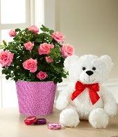 Kiss Me Quick Valentine's Day Mini Rose with Chocolate & Plush Bear