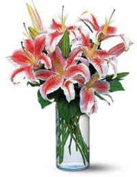 Pink stargazer lilies in cylinder vase